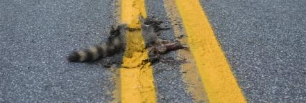 painted-roadkill-2